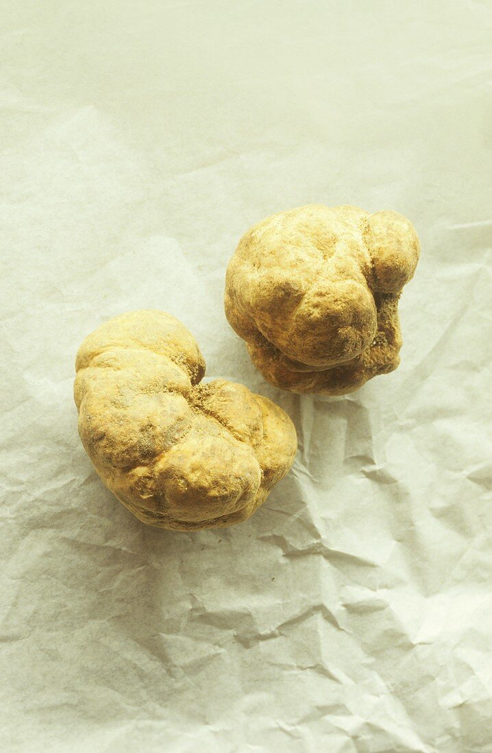 Two white truffles from Alba in Piedmont
