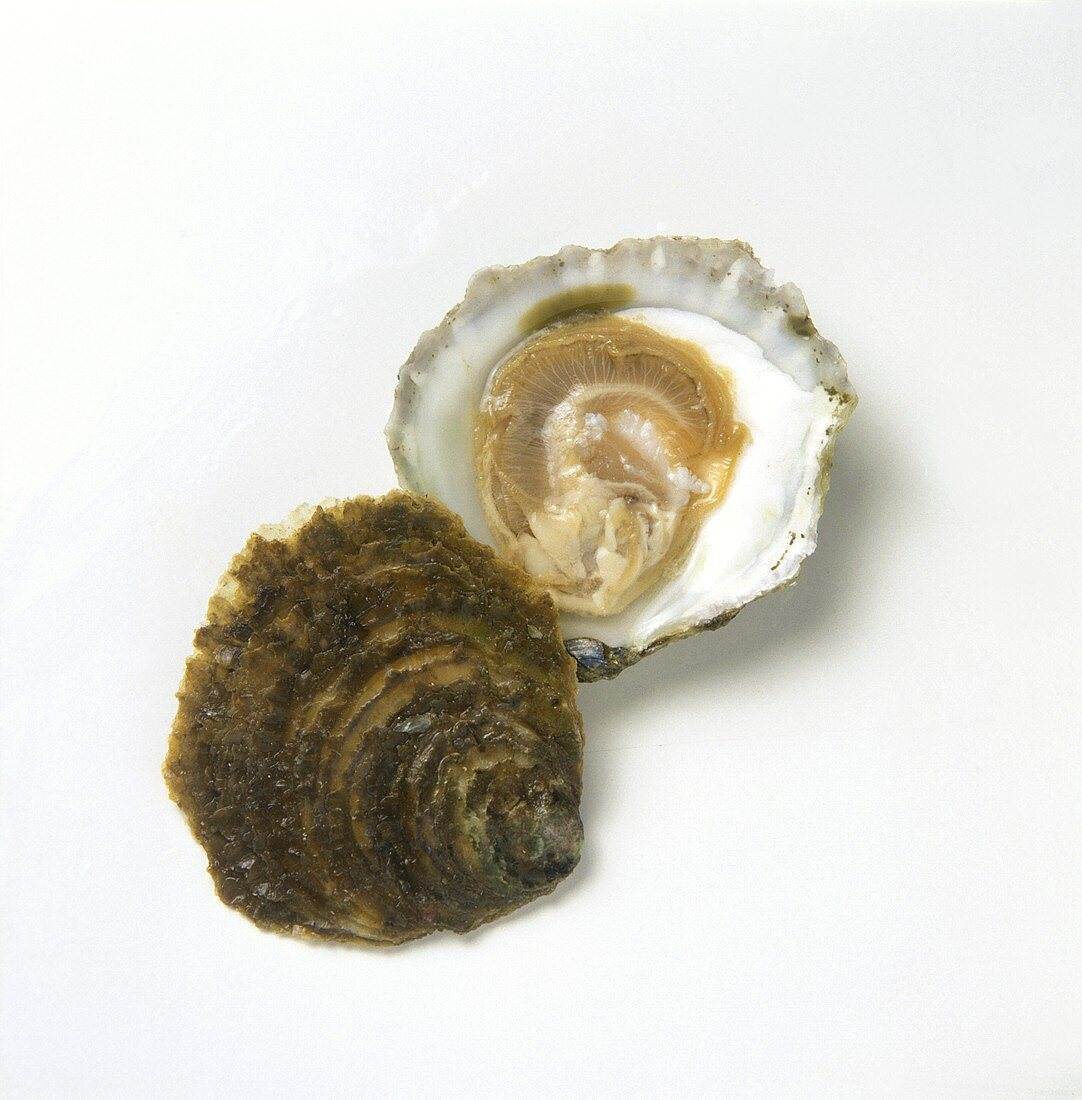 An opened Belons oyster