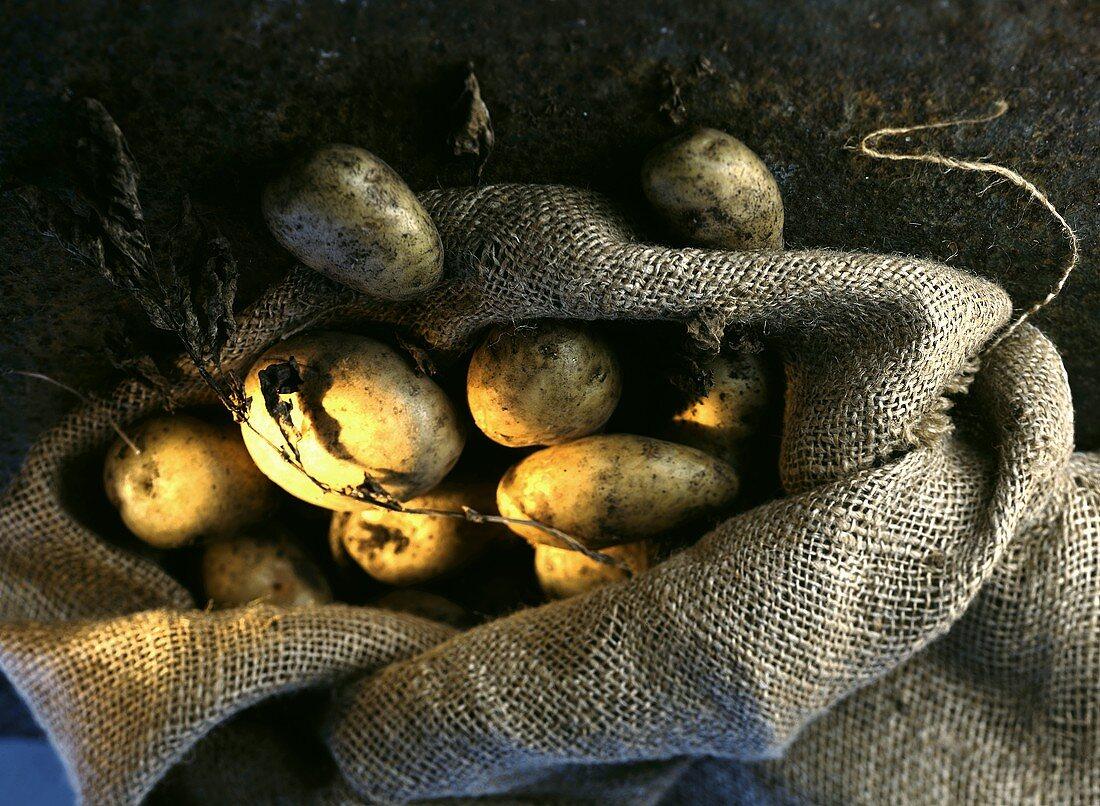 Potatoes in a potato sack
