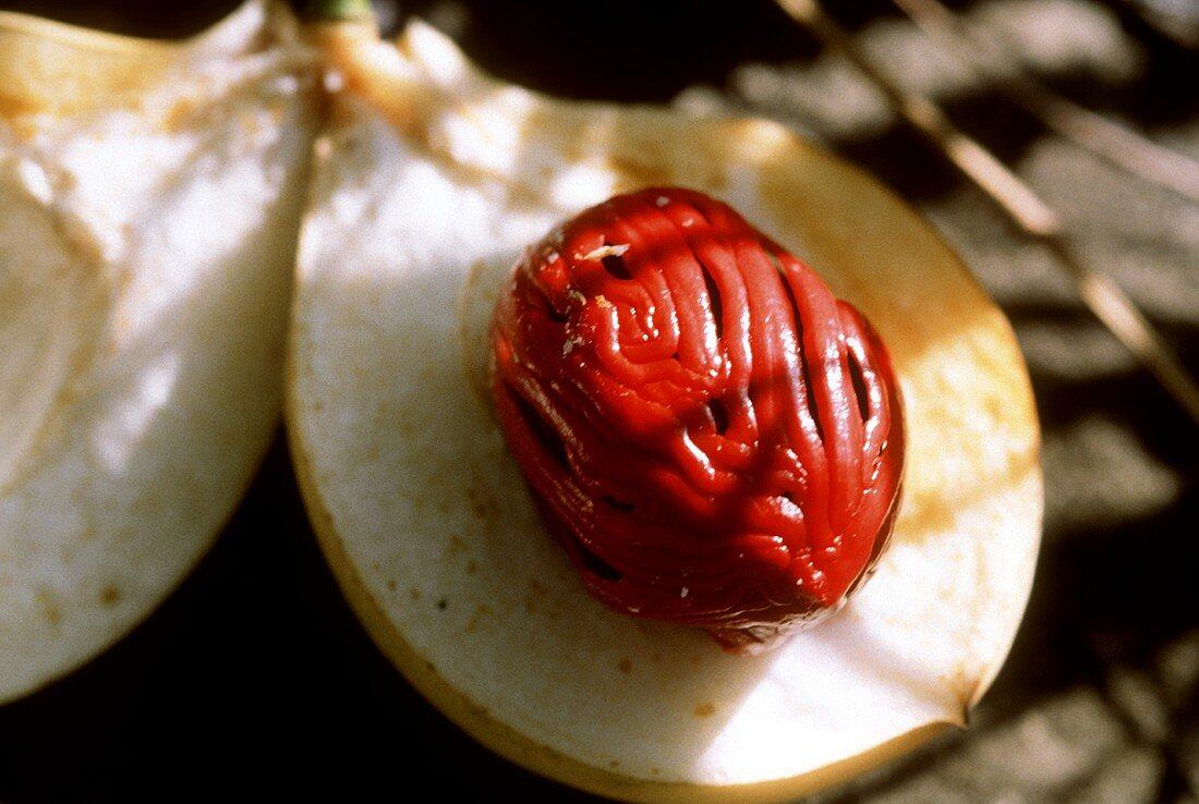 Half opened nutmeg fruit with nutmeg