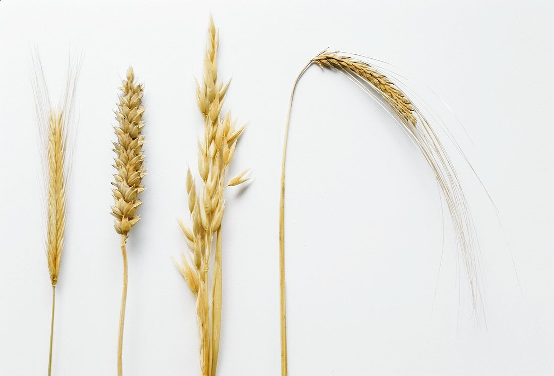 Four KInds of Grains