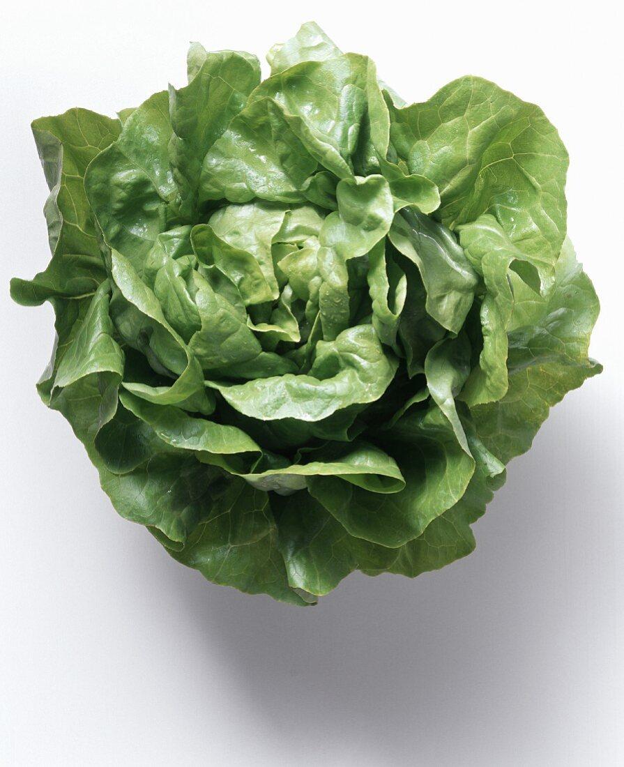 Head of Butterhead Lettuce