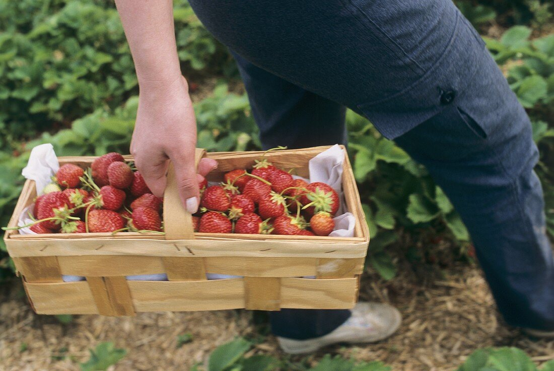 Chip basket filled with strawberries being carried