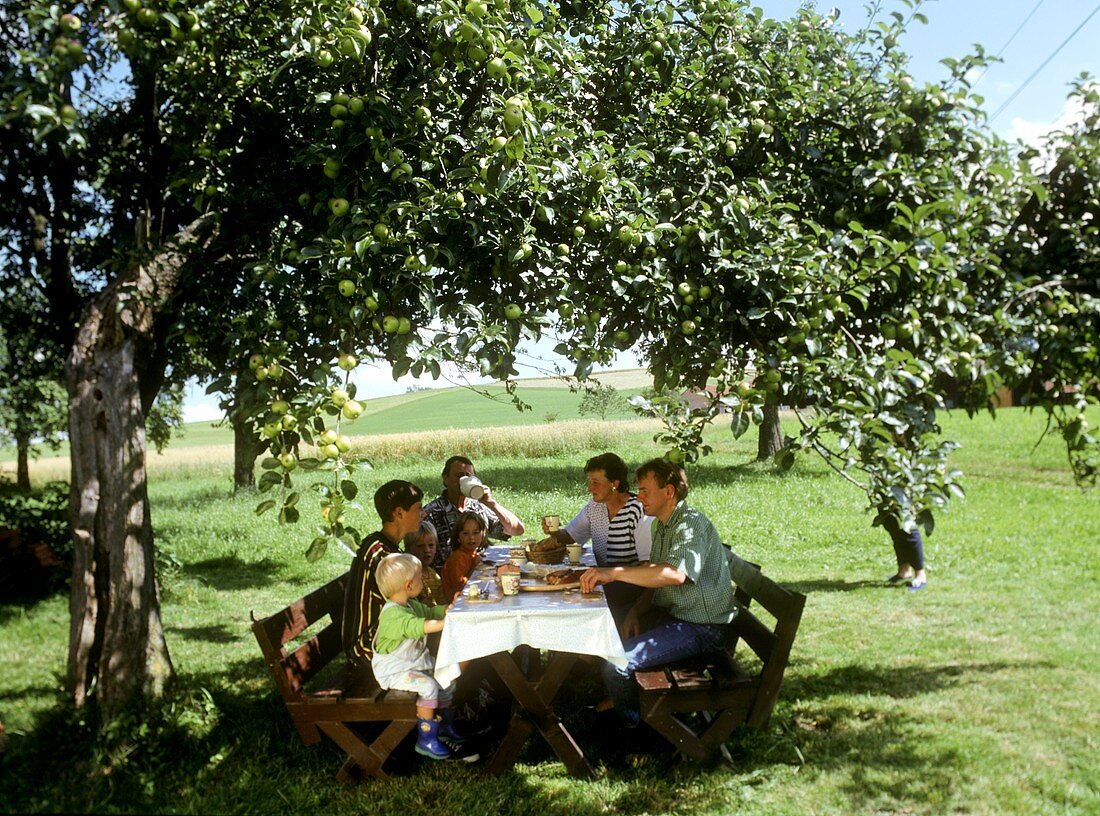 Family eating light meal under apple tree in a meadow