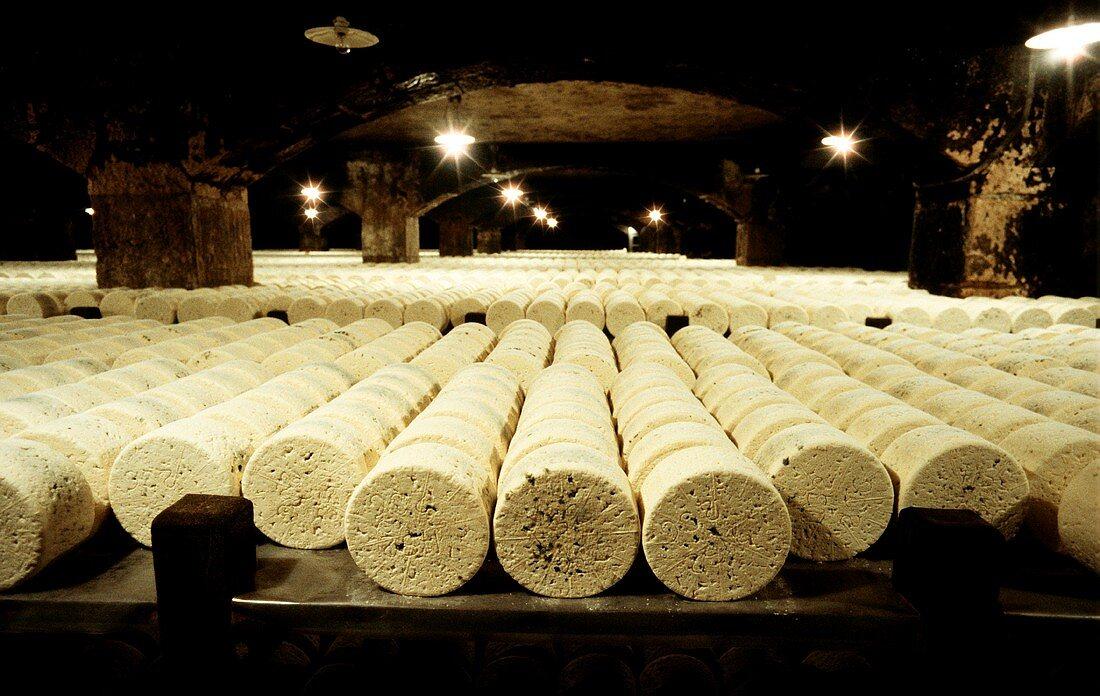 Fresh Roquefort cheese maturing in store in Roquefort