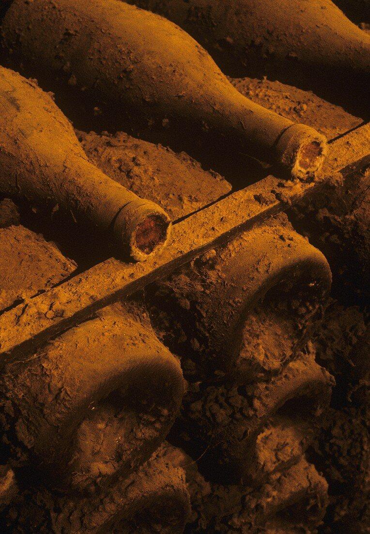 Old wine bottles laid down in Chateau de Pommard, Burgundy