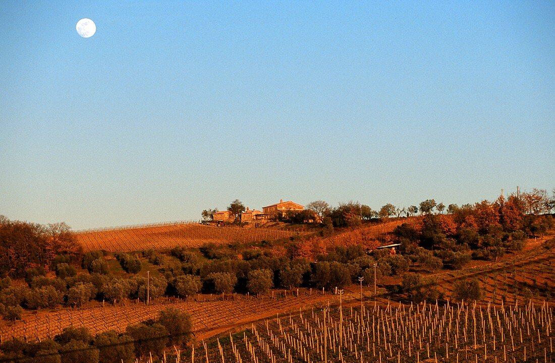 Mond über Weinberg bei Castelnuovo Dell Abate, Toskana
