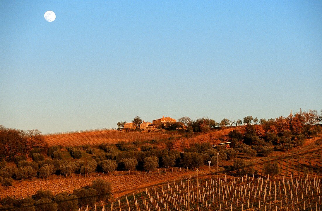 Moon over vineyard, Castelnuovo Dell Abate, Tuscany