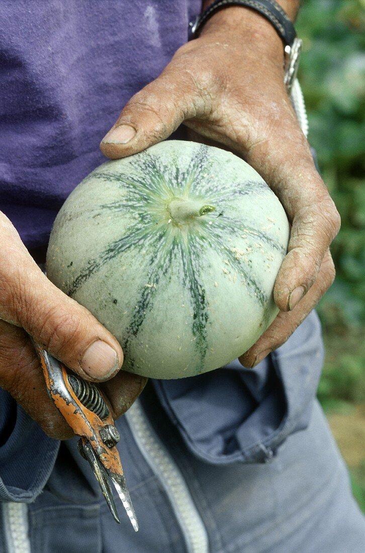 Man holding a charentais melon