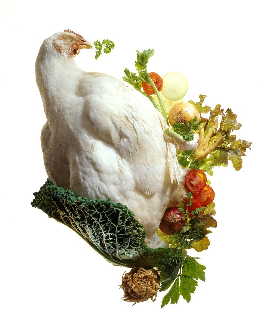 Chicken with feathers and vegetables