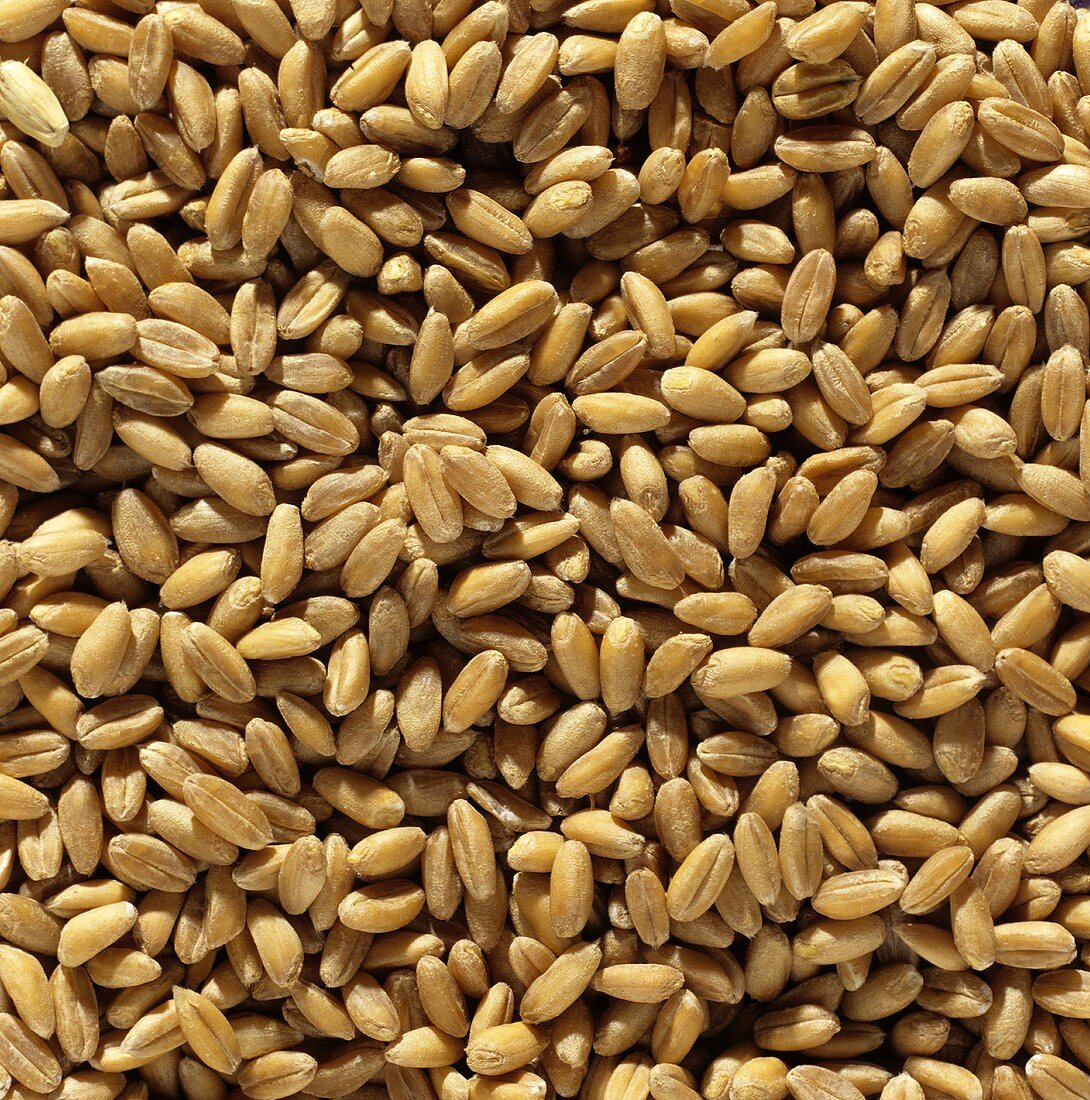 Spelt (filling the picture)