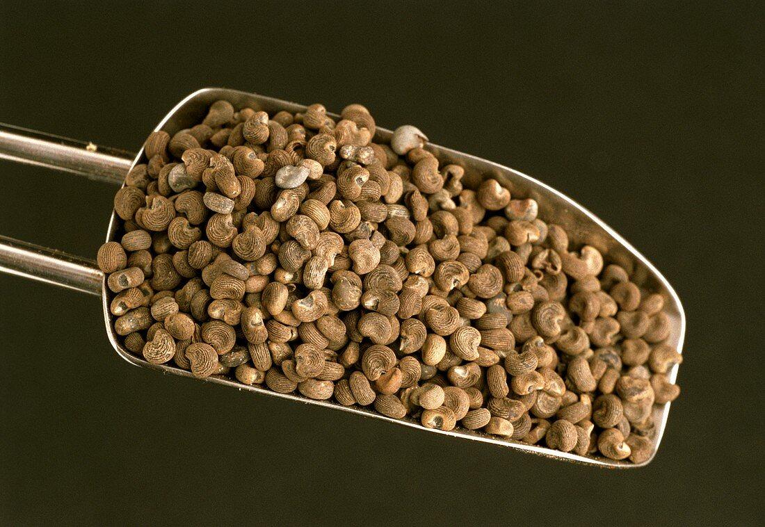 Abelmoschus-Körner (Abelmoschus esculentum)