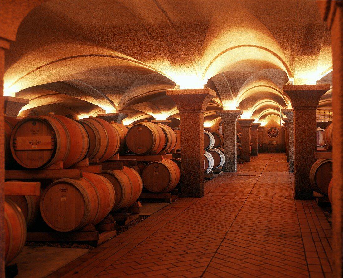 Impressive wine cellar at Steenberg Winery, Constantia
