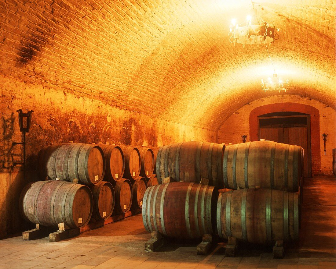 Fine wine cellar of the Vina Errazuriz Winery, chile