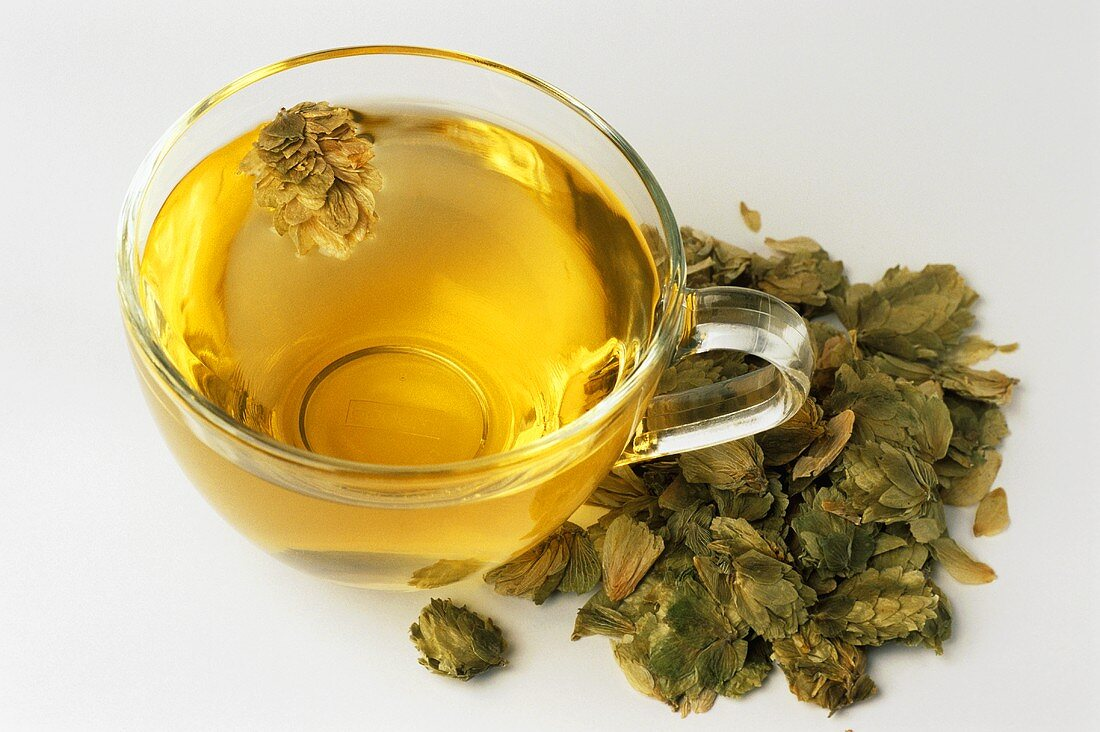 Hop tea and dried flowers (Humulus lupulus)