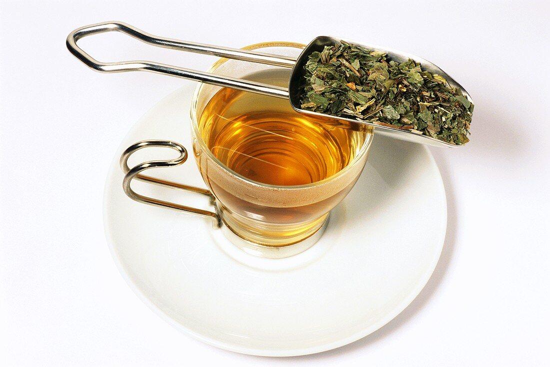 Woodruff tea (Galium odoratum)