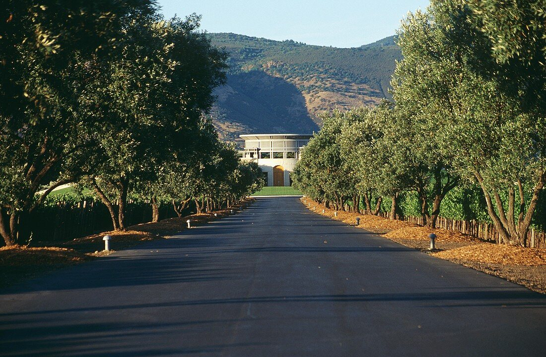 Avenue leading to Opus One Winery, Napa Valley, California