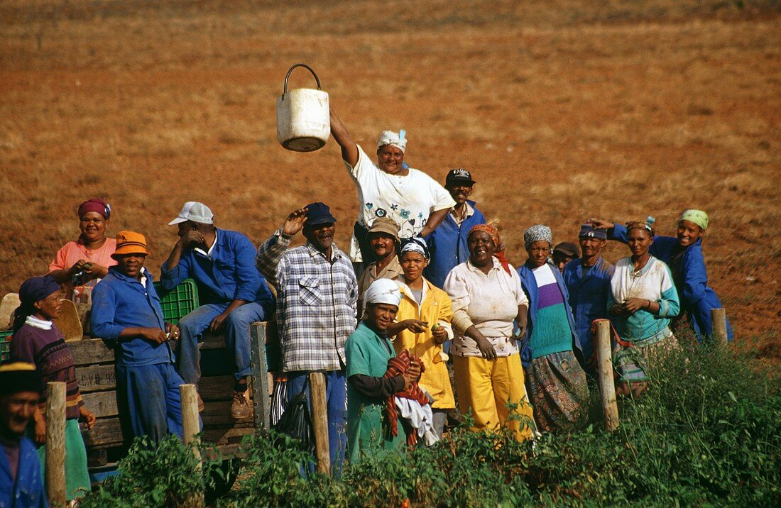 Workers in the field, Robertson, S. Africa