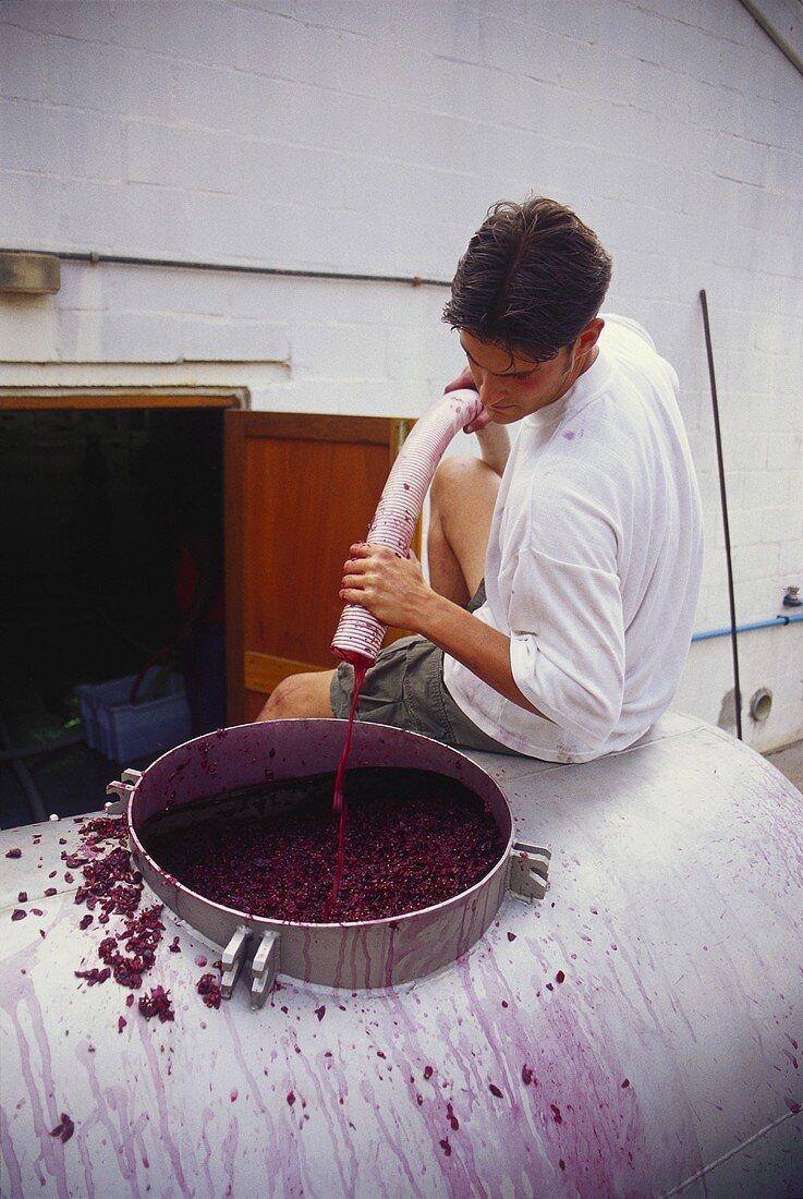 Filling the wine tank, Nitida Cellars, Durbanville, S. Africa