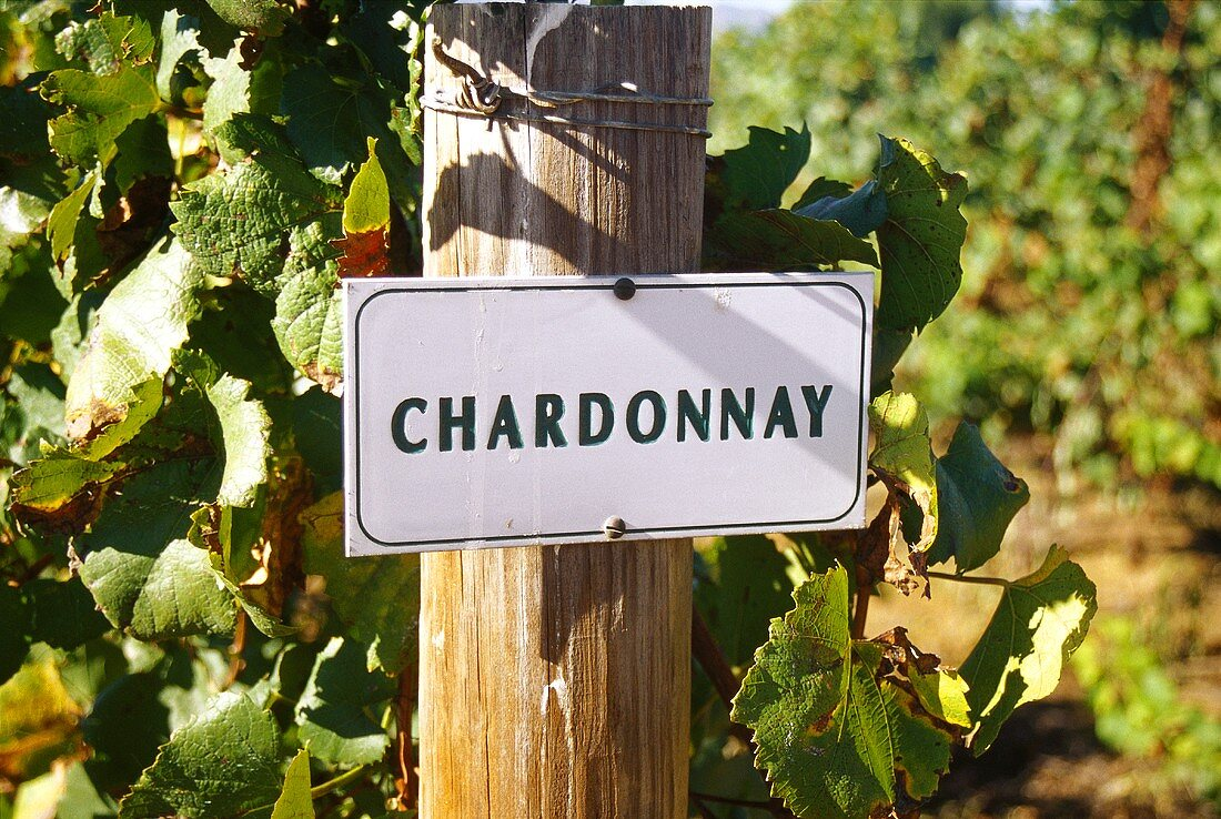 Chardonnay vineyard of Bon Courage Winery, Robertson, S. Africa