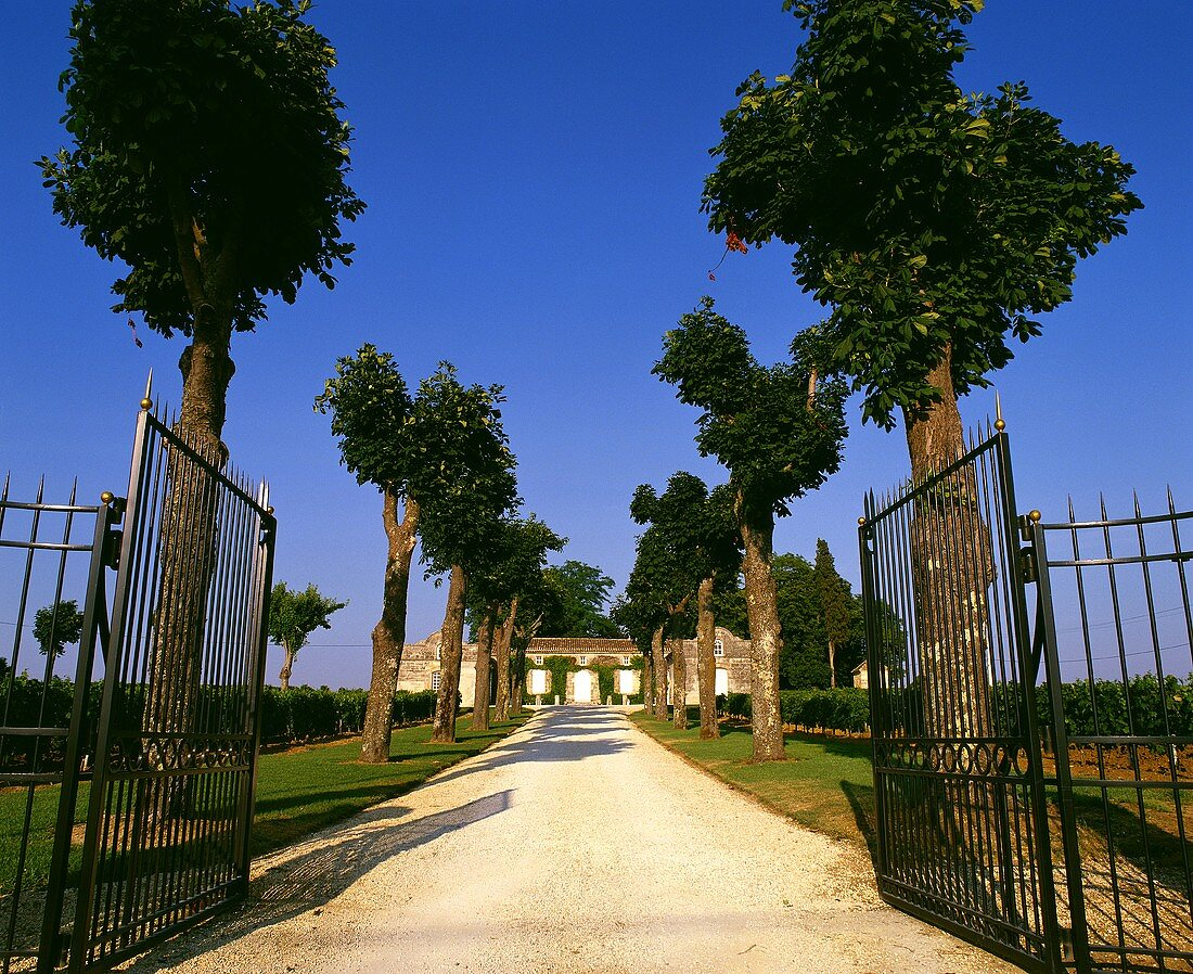 Avenue leading to a wine chateau in Bordeaux, France