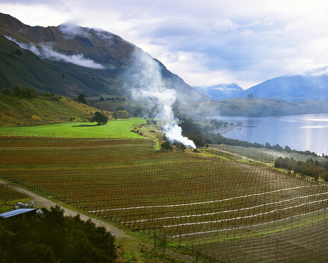 Rippon Vineyard in winter, Wanaka, Central Otago, N.Zealand