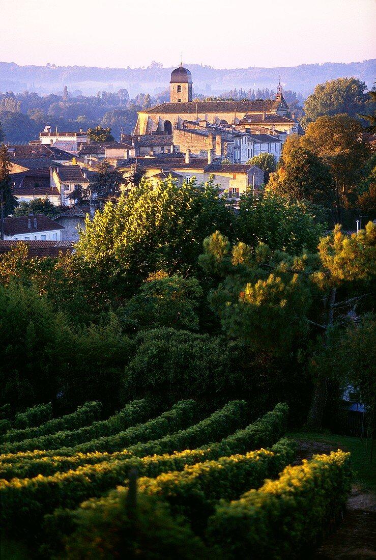 View over vineyards, Castillon la Bataille, Bordeaux