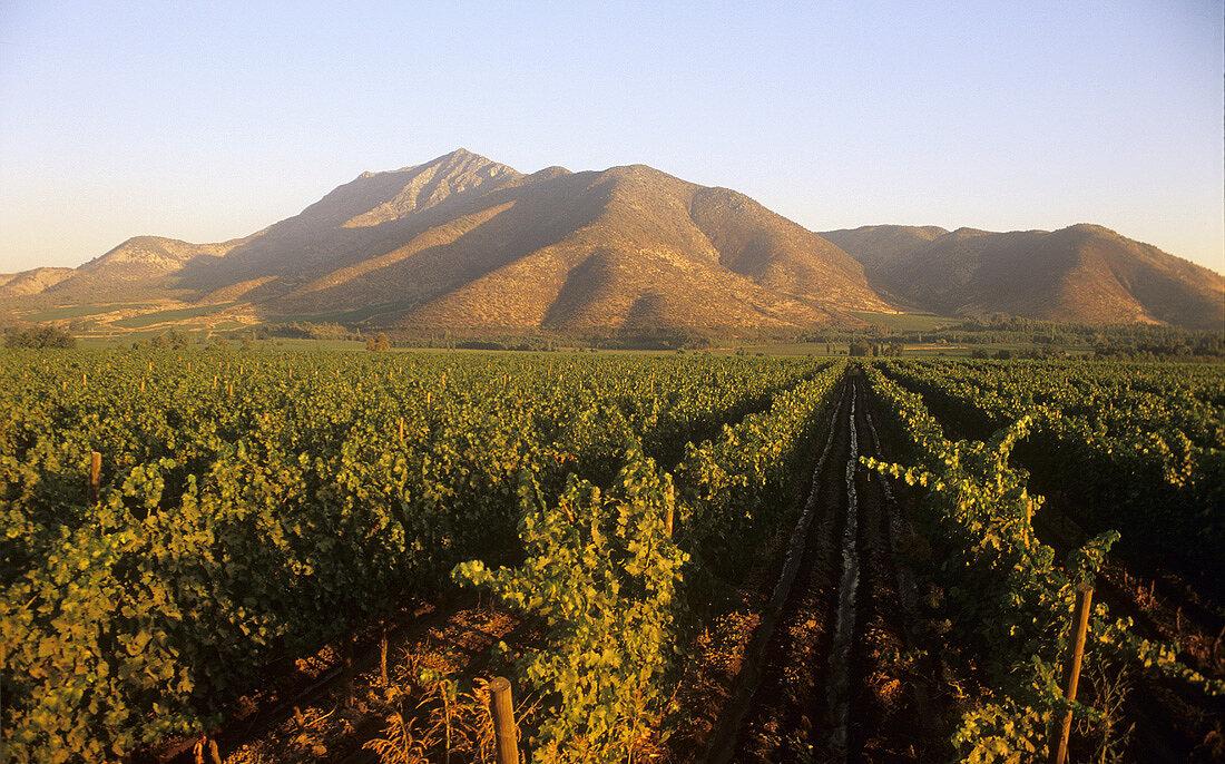 Wine-growing, Santa Rita Estate, Maipo Valley, Chile
