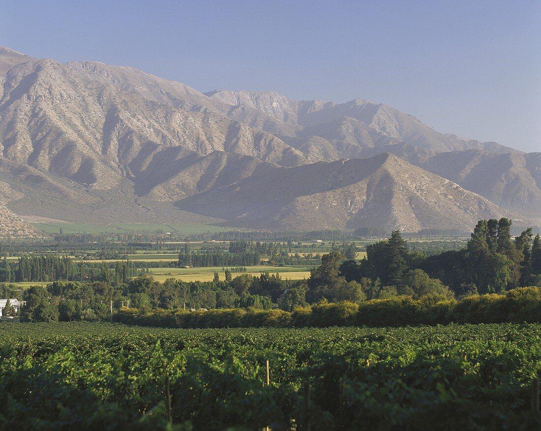 Weinberge im Valle del Aconcagua, Chile