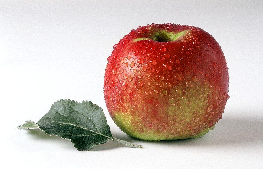 One Ahra apple and leaf