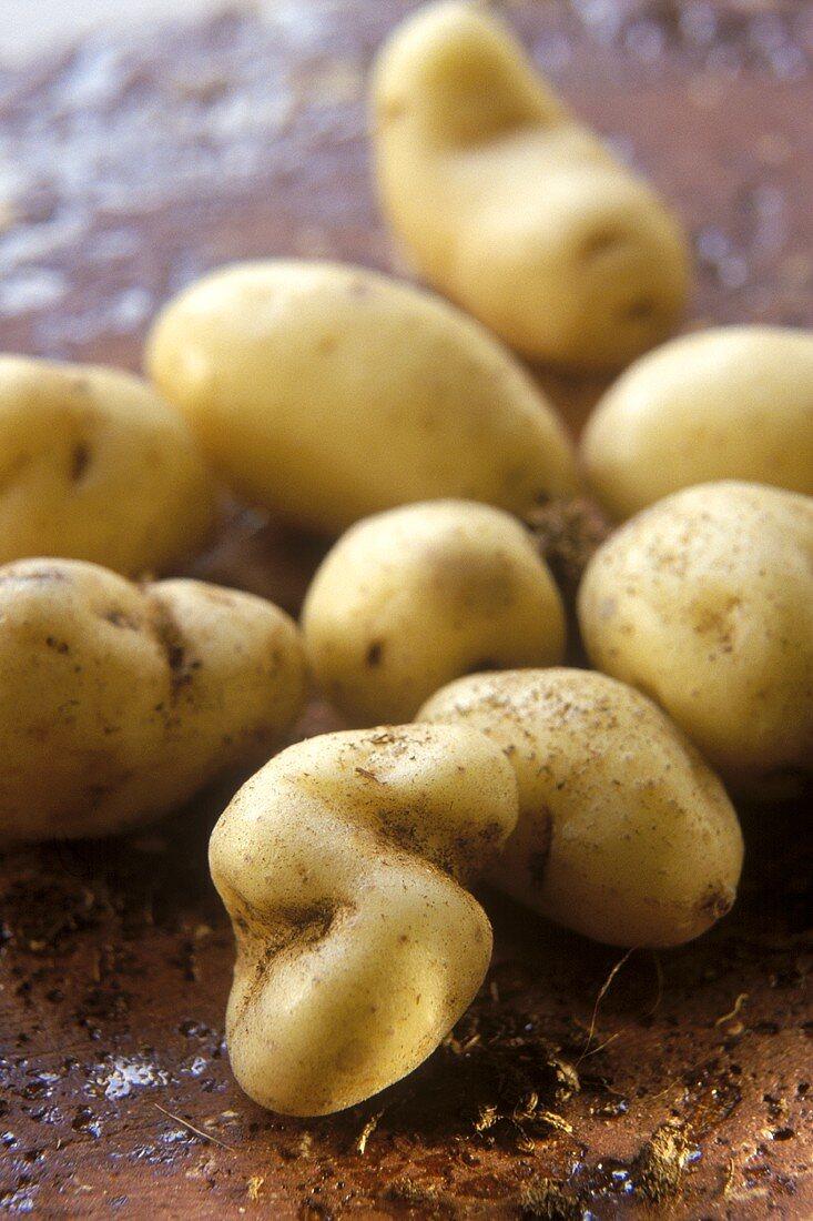 """La Ratte"" potatoes (expensive luxury potatoes)"