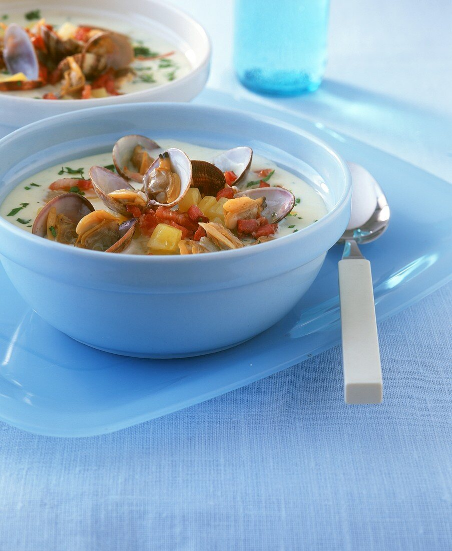 Clam chowder with clams and potatoes (USA)