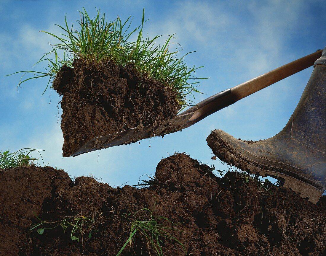 Picture symbolising 'digging up'