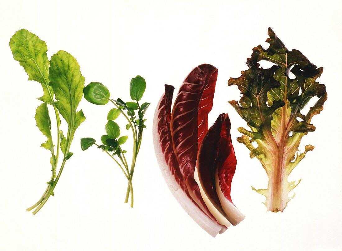 Salad leaves: rocket, watercress, radicchio, oak-leaf lettuce