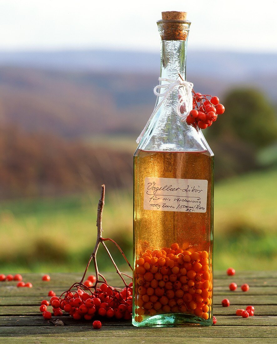 Rowan berry liqueur in a bottle