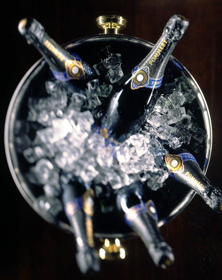 Pommery Brut Royale champagne bottles in cooler