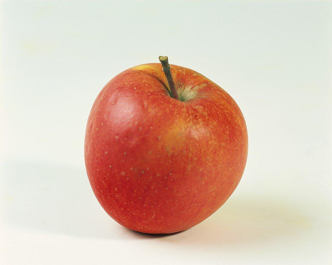 One Pinova apple