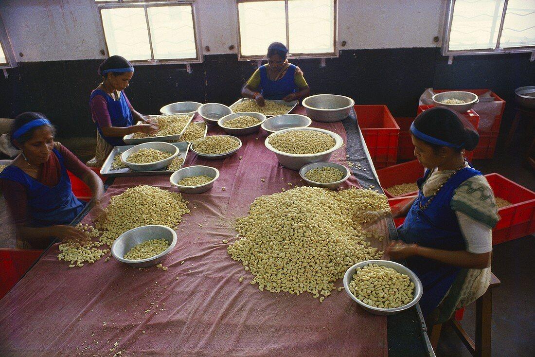 Women sorting cashew nuts (Karnataka, India)