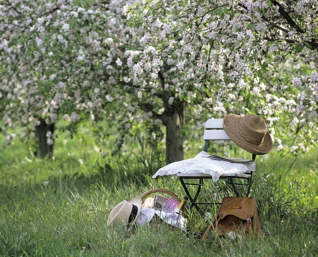 Chair, rucksack & picnic basket under flowering apple tree