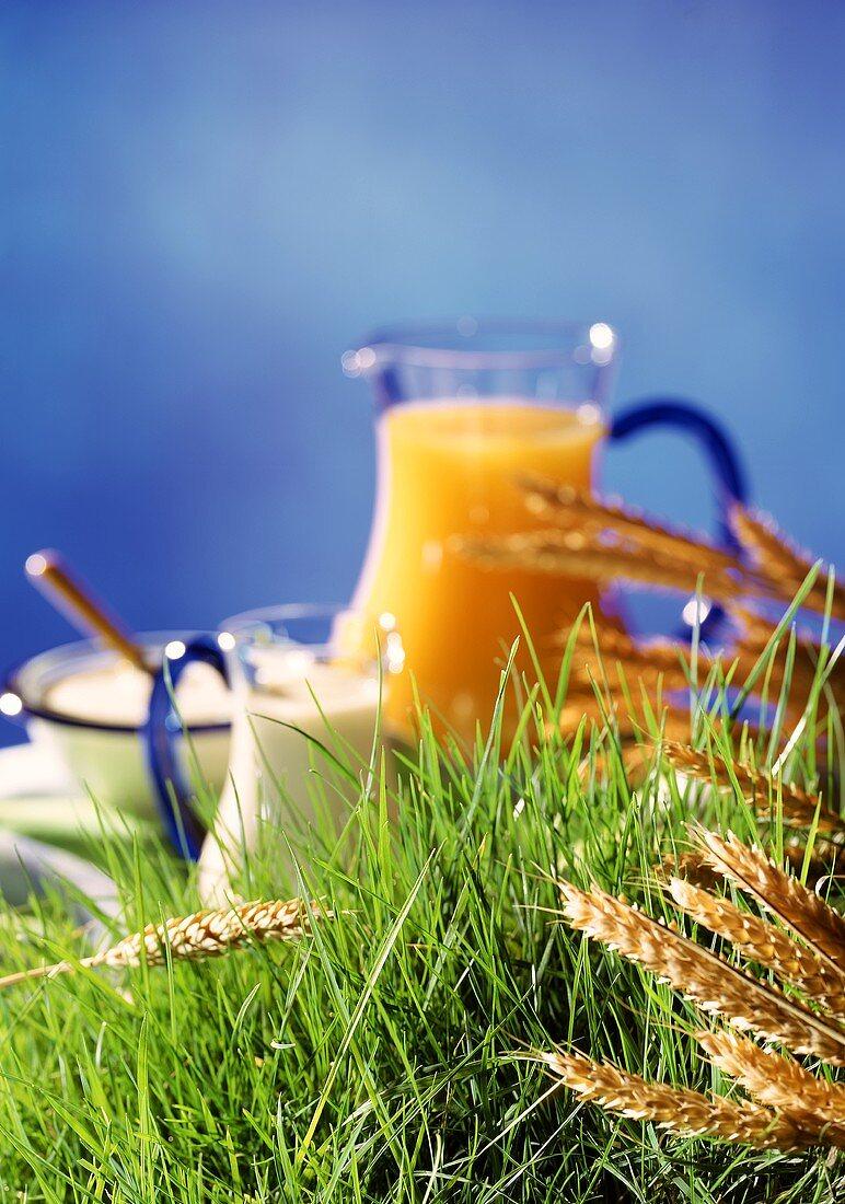Healthy ingredients (quark, milk, juice, cereals) on grass