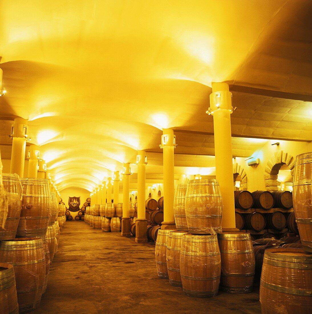 Wine cellar, Fredericksburg Estate, Simondium, Paarl, S. Africa