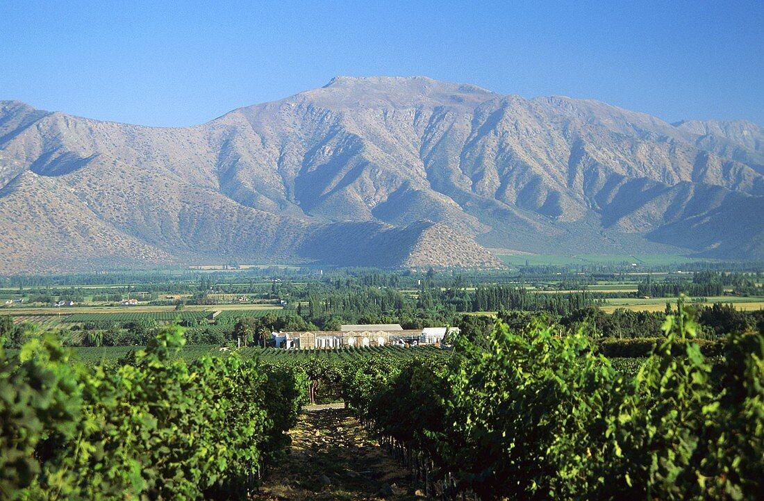 Blick auf Viña Errázuriz, Panquehue, Aconcagua-Tal, Chile