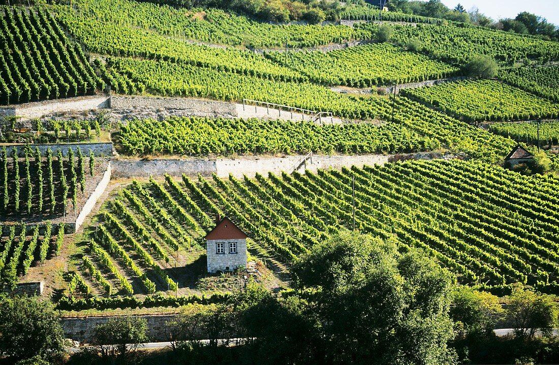 Vineyards near Freyburg with River Unstrut, Saale-Unstrut