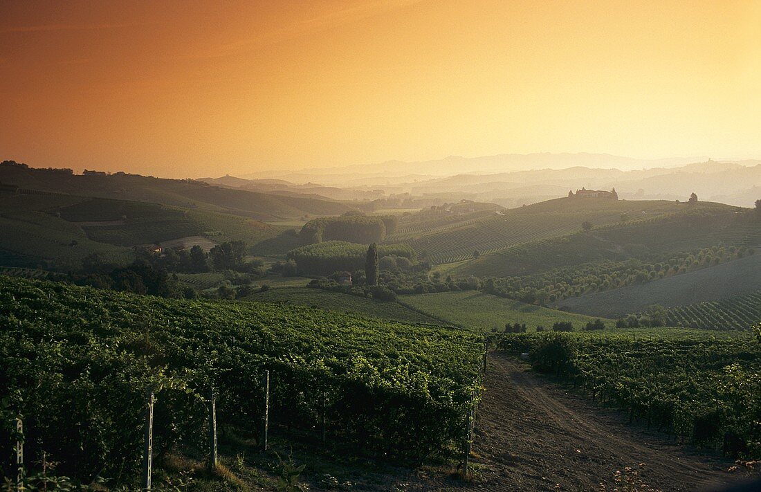 Sunrise over the vineyards, Barolo, Piedmont, Italy