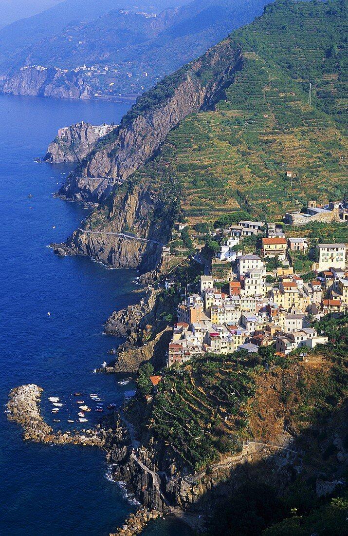 Riomaggiore, DOC Cinque Terre, Liguria, Italy