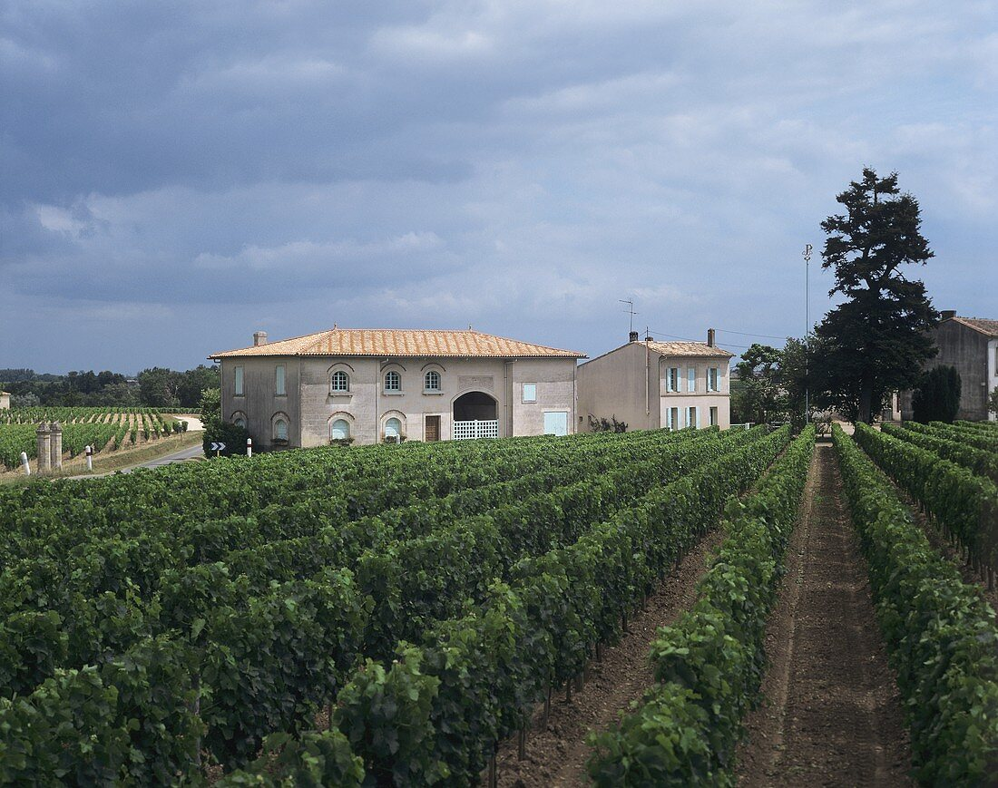 The Château Pétrus estate, Pomerol, Bordeaux, France