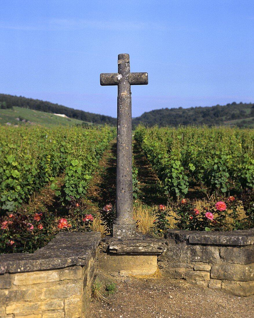 The 'La Tache' vineyard, Vosne-Romanee, Burgundy, France