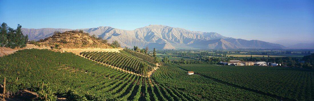 Das Weingut Errázuriz bei Panquehue im Aconcagua-Tal, Chile