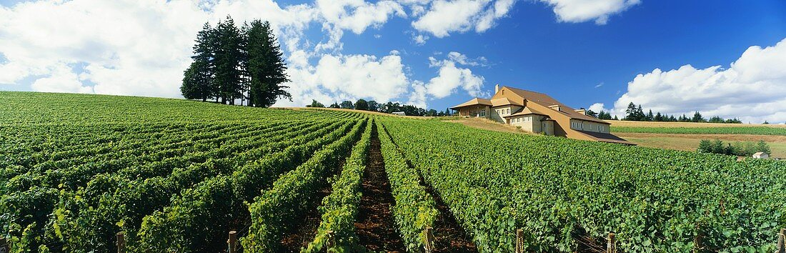 Amity Vineyards, Domaine Drouhin in Oregon, USA