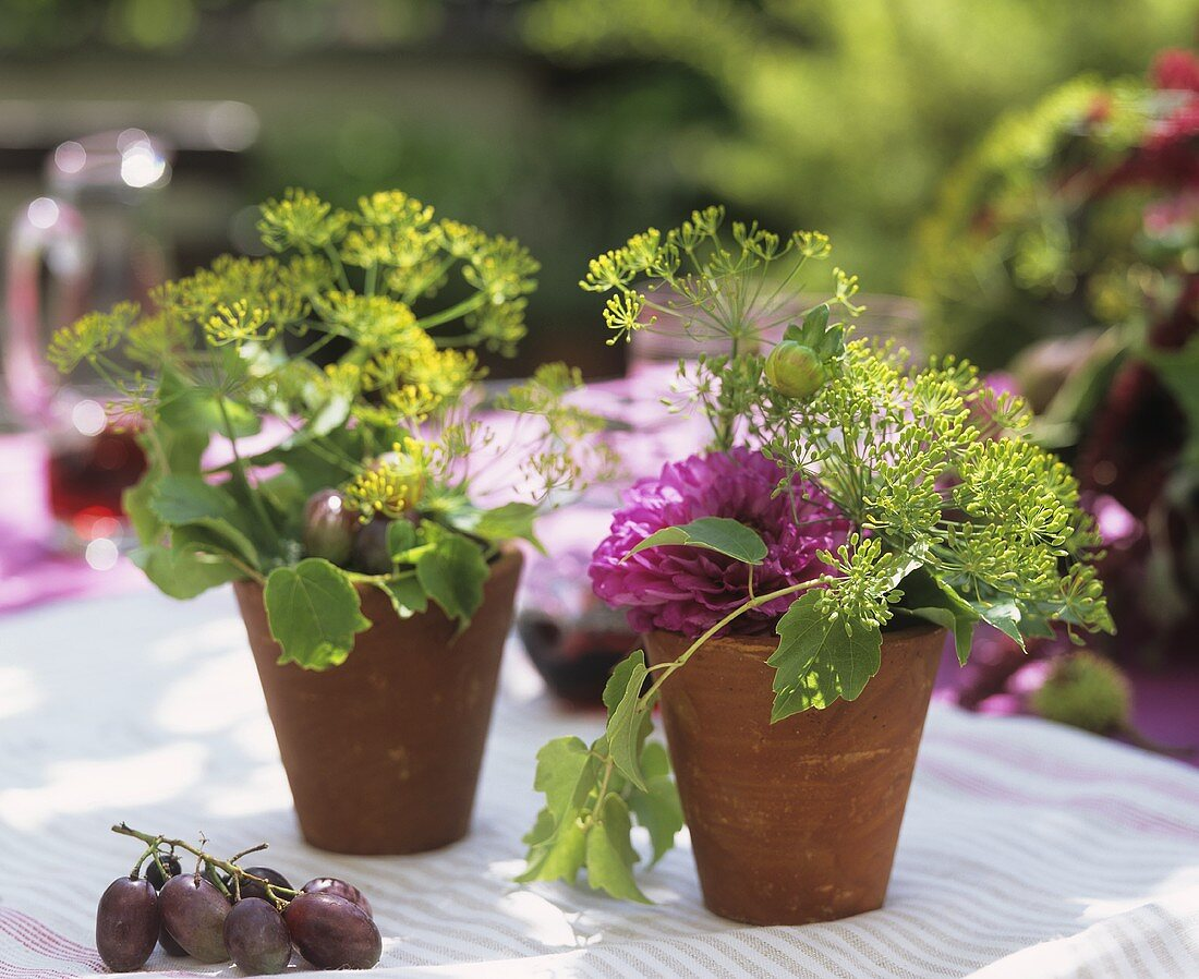 Terracotta pots filled with dahlias, dill, vine leaves & tendrils